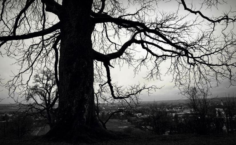The Dark forest – 'The beginning'